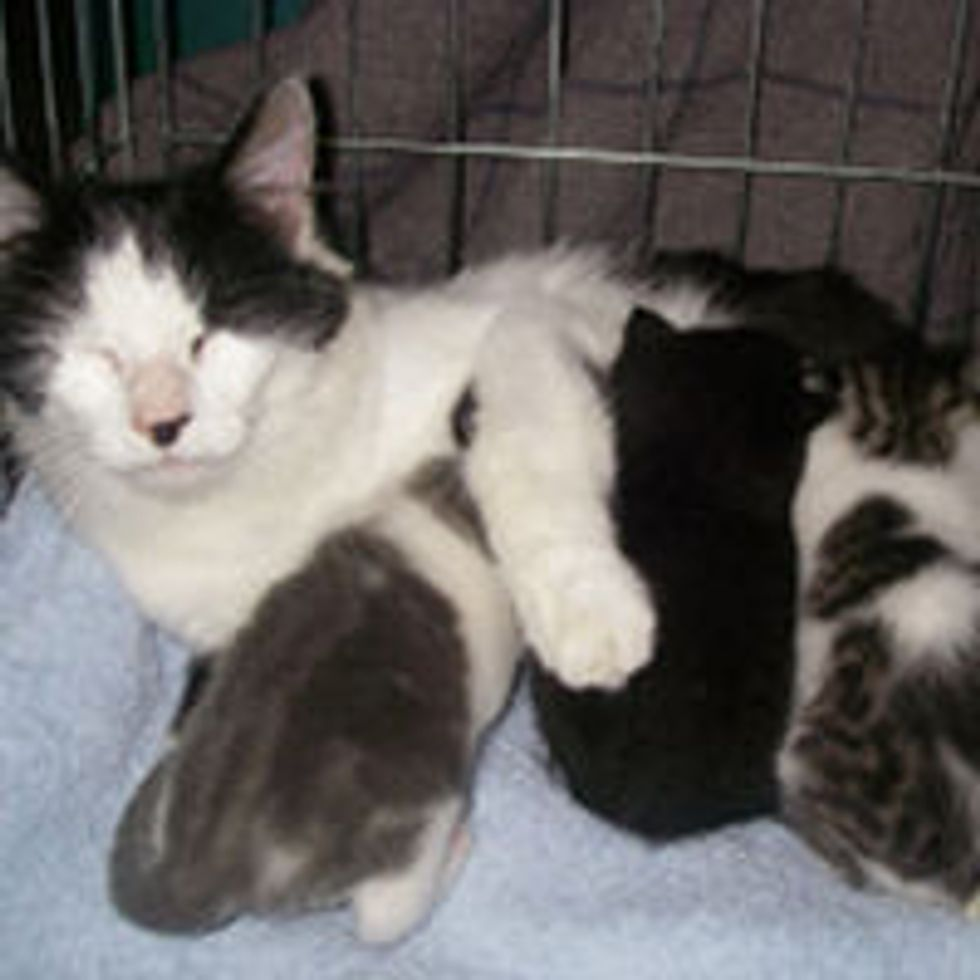 Cat Mama Gave Birth to 3 Kittens 25 Feet Up a Tree, Now Rescued!