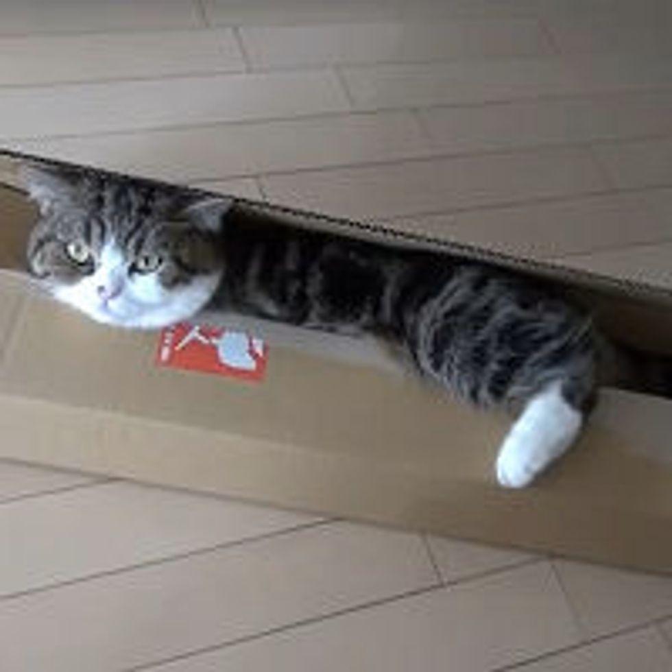 Maru Sees a Long Slim Box