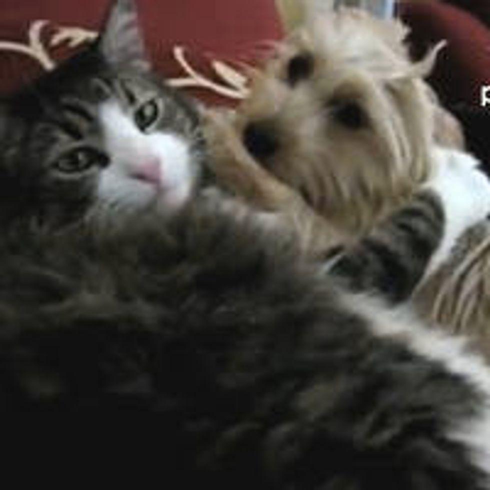 Kitty Gives Dog a Love Bath