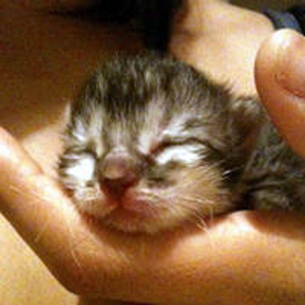 Journey of a Little Rescue Orphan Kitten