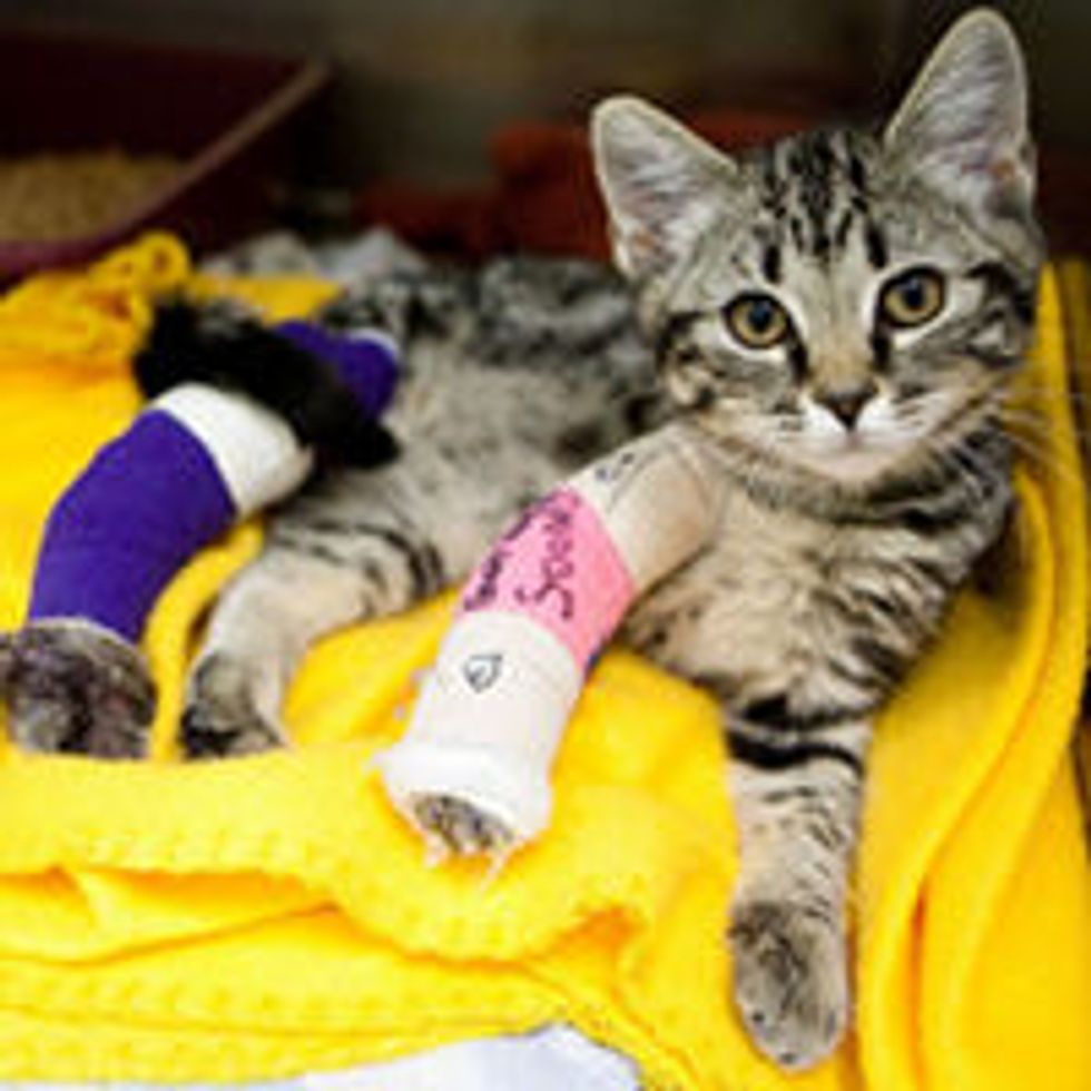 Rivers the Little Survivor from Buckshot, Recovering