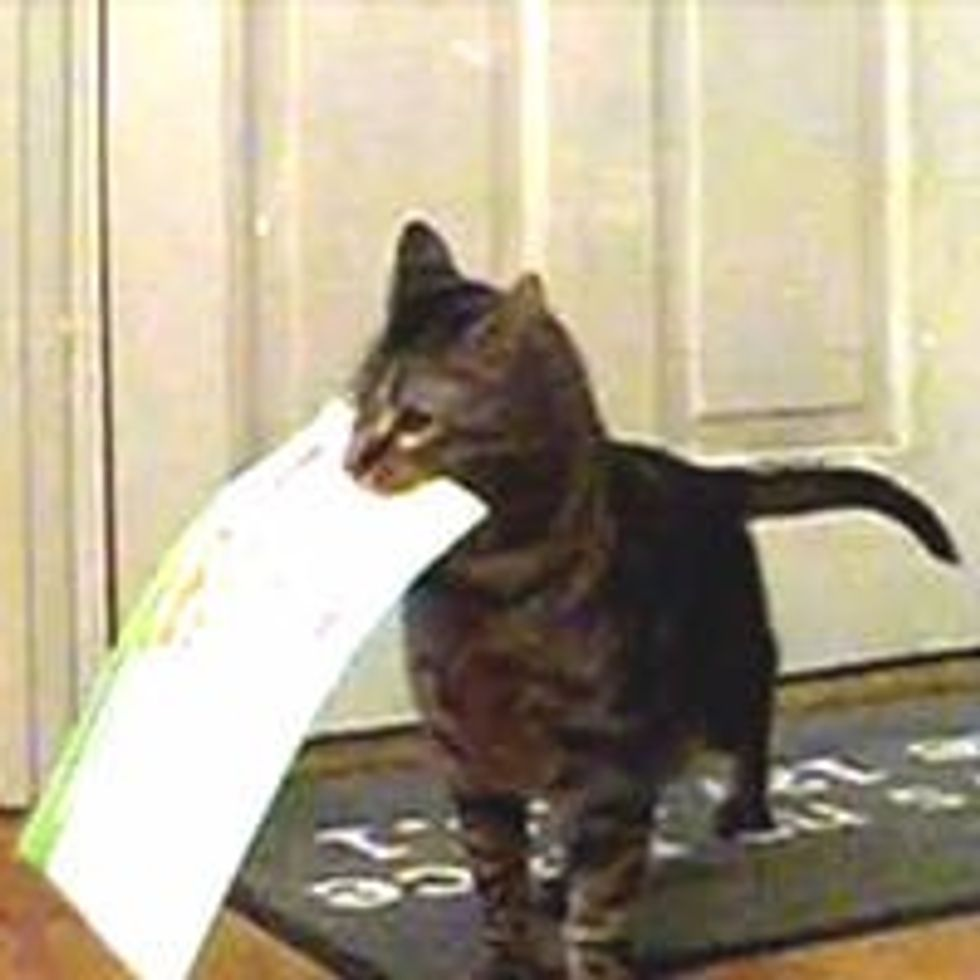 Kitty Gets Mail