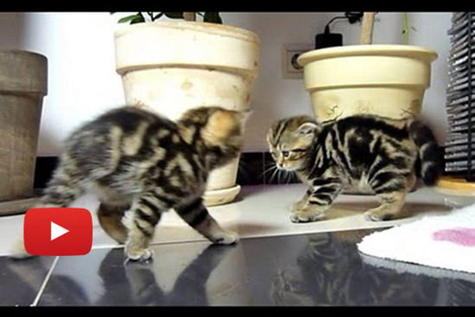 Kittens Crab Walk Dancing