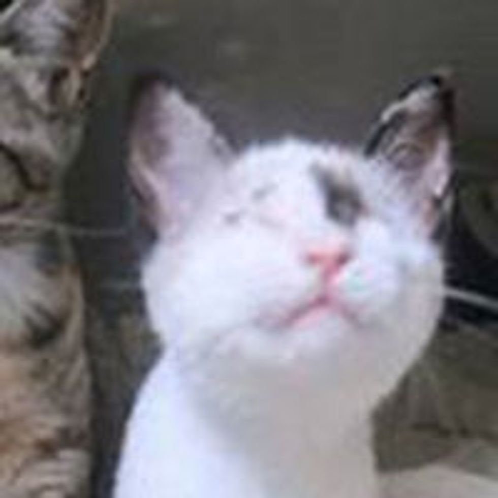 Blind Kitten Covered in Motor Oil Saved, Now Earns Happy Normal Life