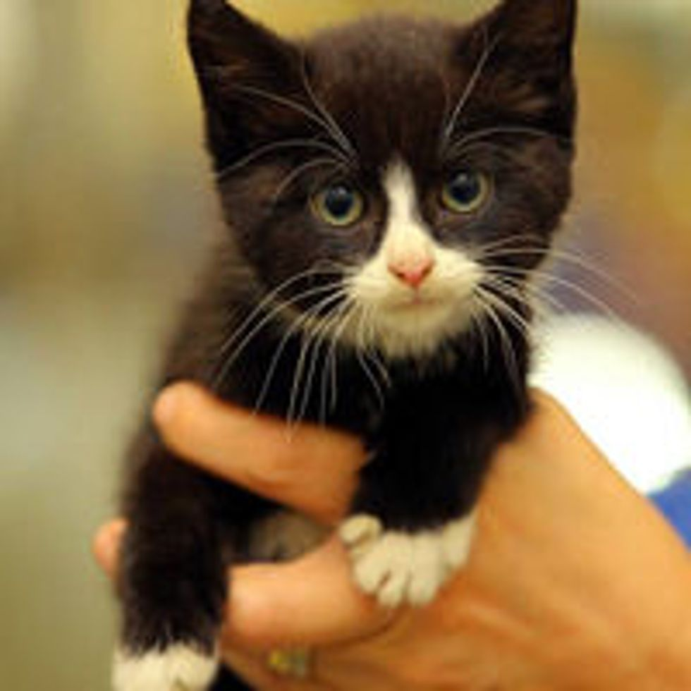 Kitten Survives 14-mile Trip and 3 Days Under Car Engine