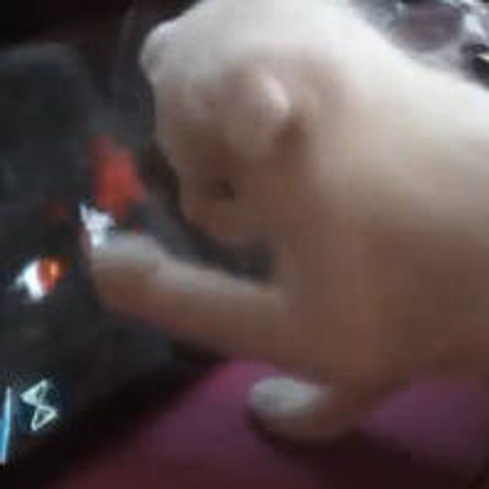 5-week-old Kitten Playing Dishonored on iPad