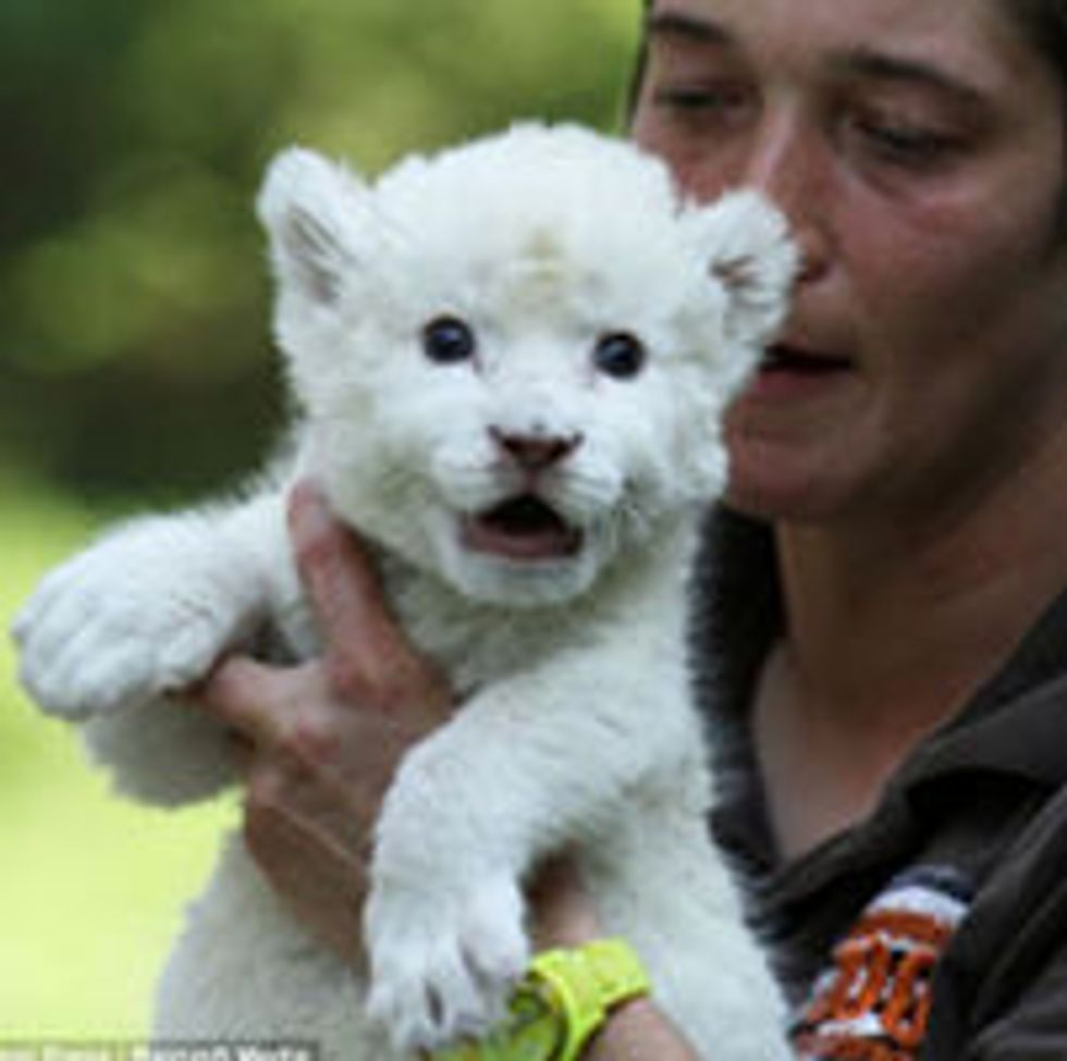 White Lion Cub Adopted by Dog