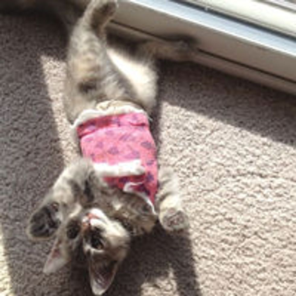 Kitty Gets Surgery, Now Happy and Full of Life