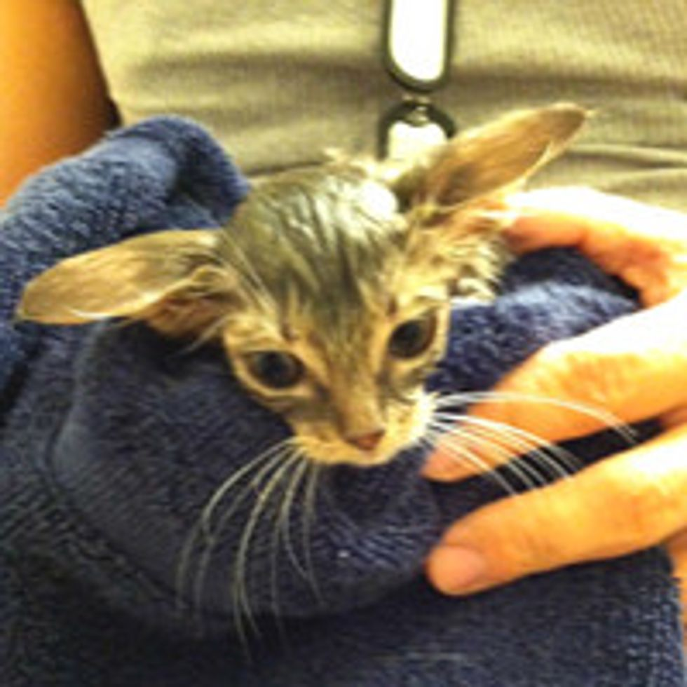 Traffic and Hail Storm Kitty Gets a Second Chance
