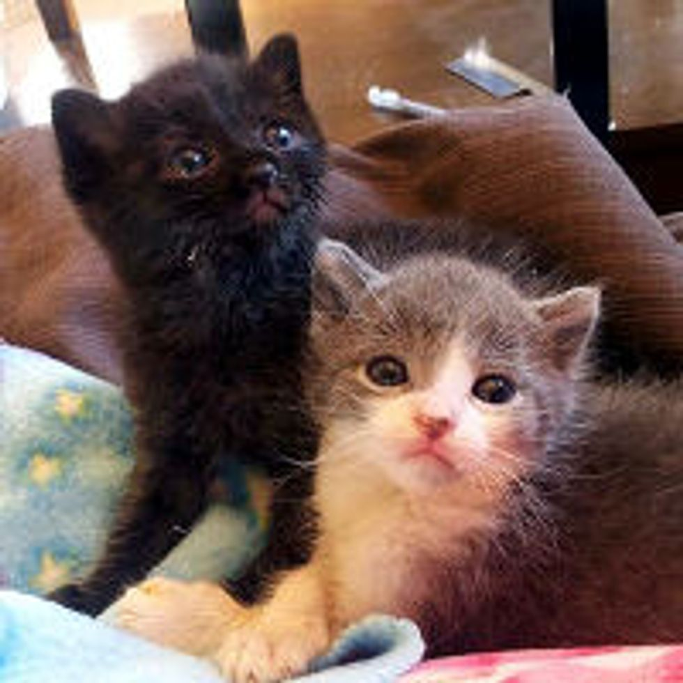 Love Changes Lives of Tiny Fosters