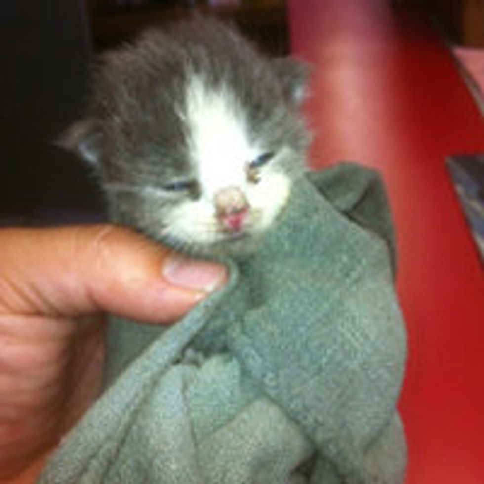 Two Kittens Found in Spare Tire are Given a Second Chance
