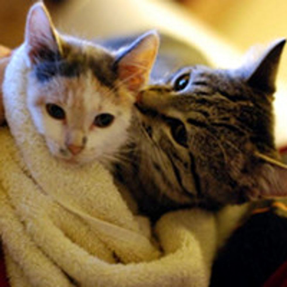 Pip the Wonder Kitty Meets Izzy the Kitten: Both Special in a Similar Way