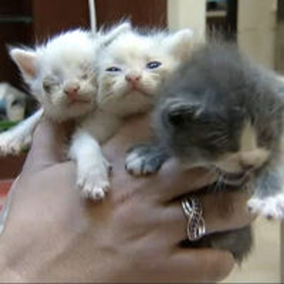 Workers Saved Kittens from Trash