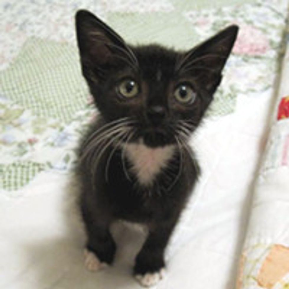 Tiny Tuxedo Kitten Saved at Car Wash, Now Living the Dream