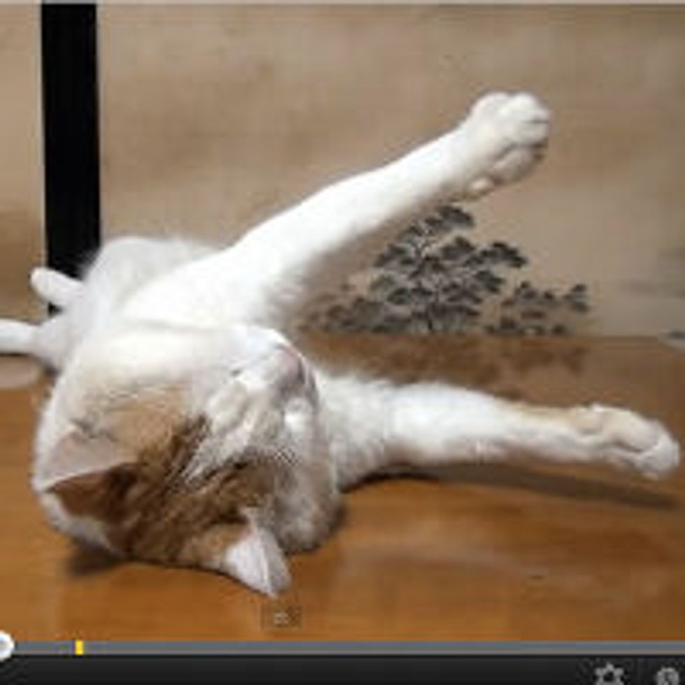 Shiro the Cat Falls Asleep to Gravity