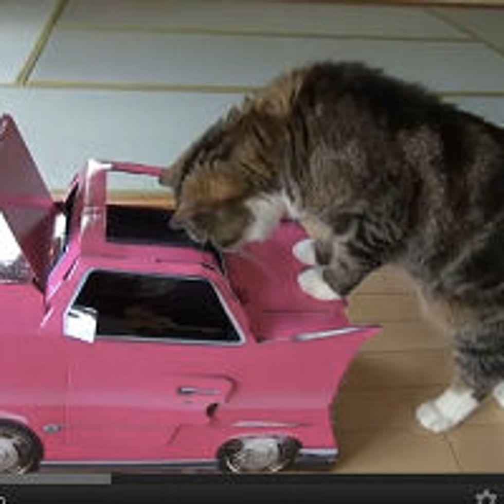 Maru and His New Box Car