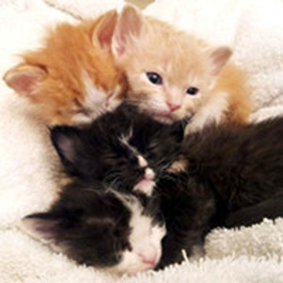 Four Fuzzy Kittens Found at Garage Sale Get a Second Chance