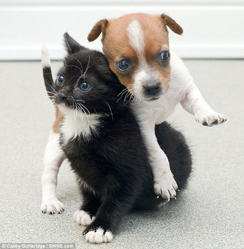 Rescue Kitty and Abandoned Puppy Brought into Shelter Together Now Are Like Sisters