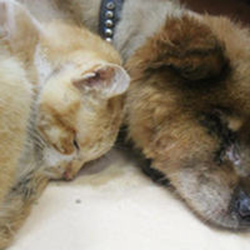Rescue Cat and Dog Help Each Other Through Thick and Thin