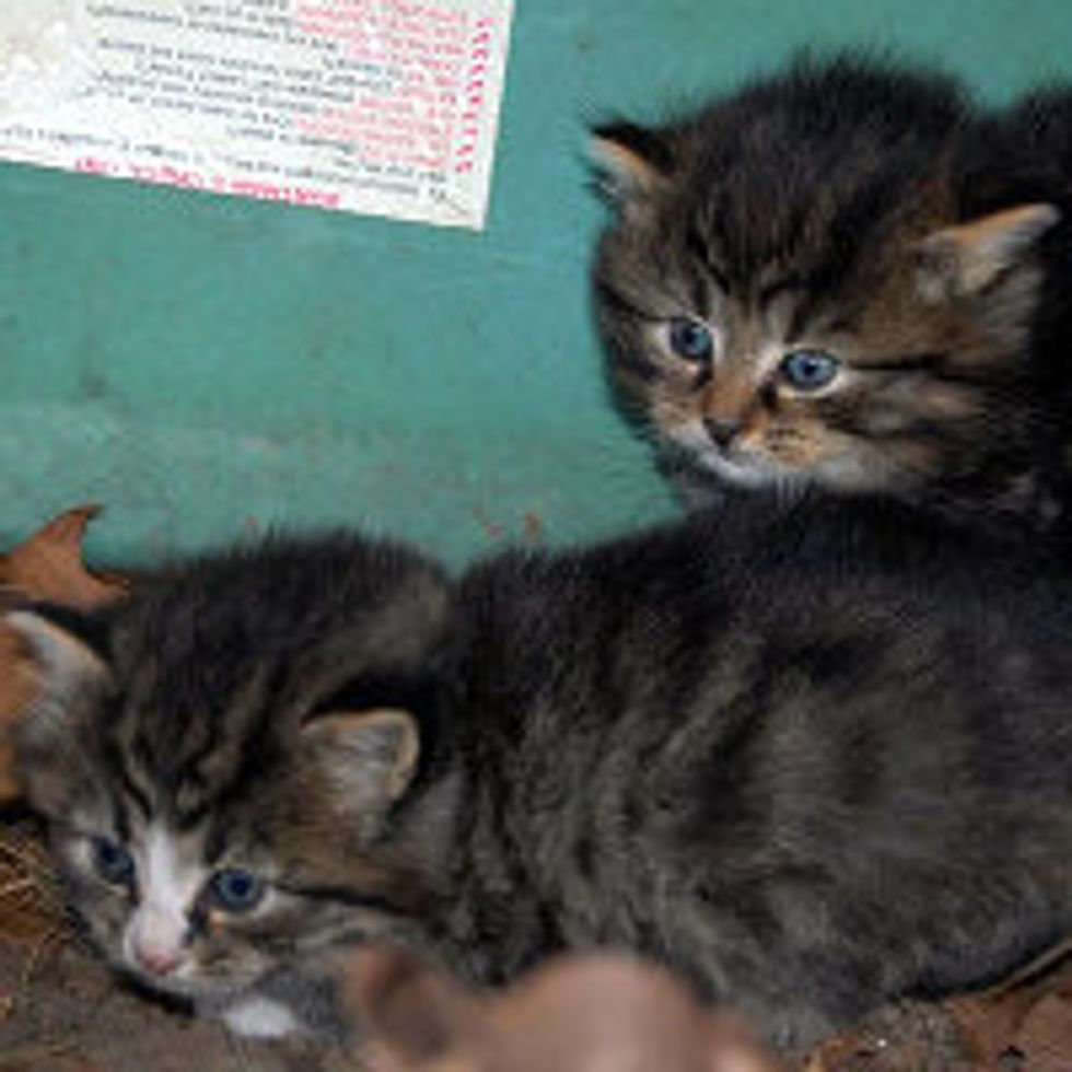 Feral Kittens Found by Dog Under a Boat