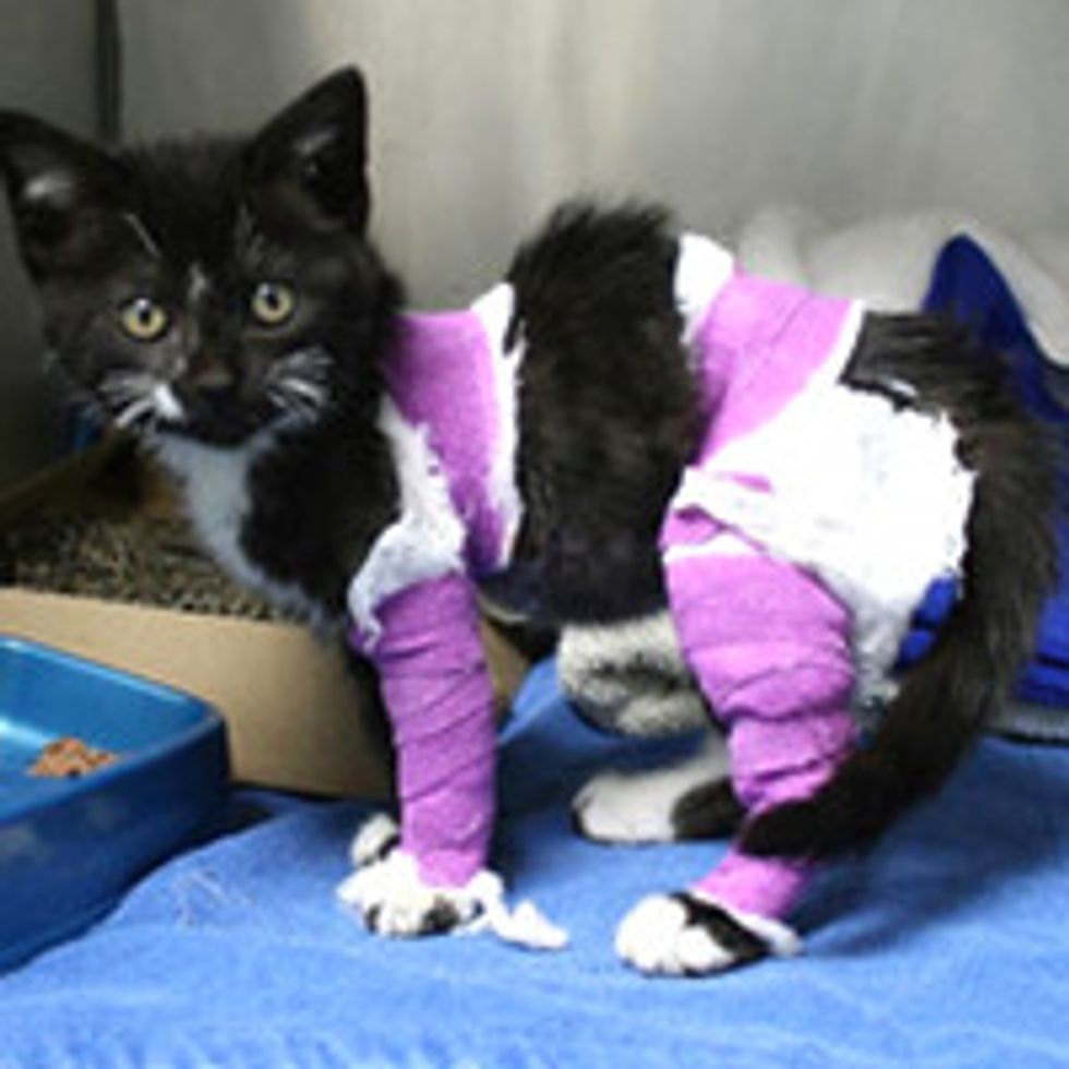 10-week-old Kitten with Burns Finds Hope
