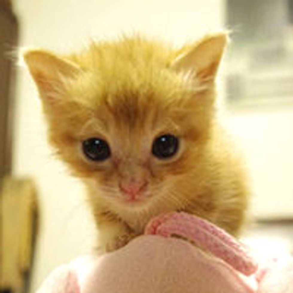 Itty Bitty Adopted Ginger and His New Home