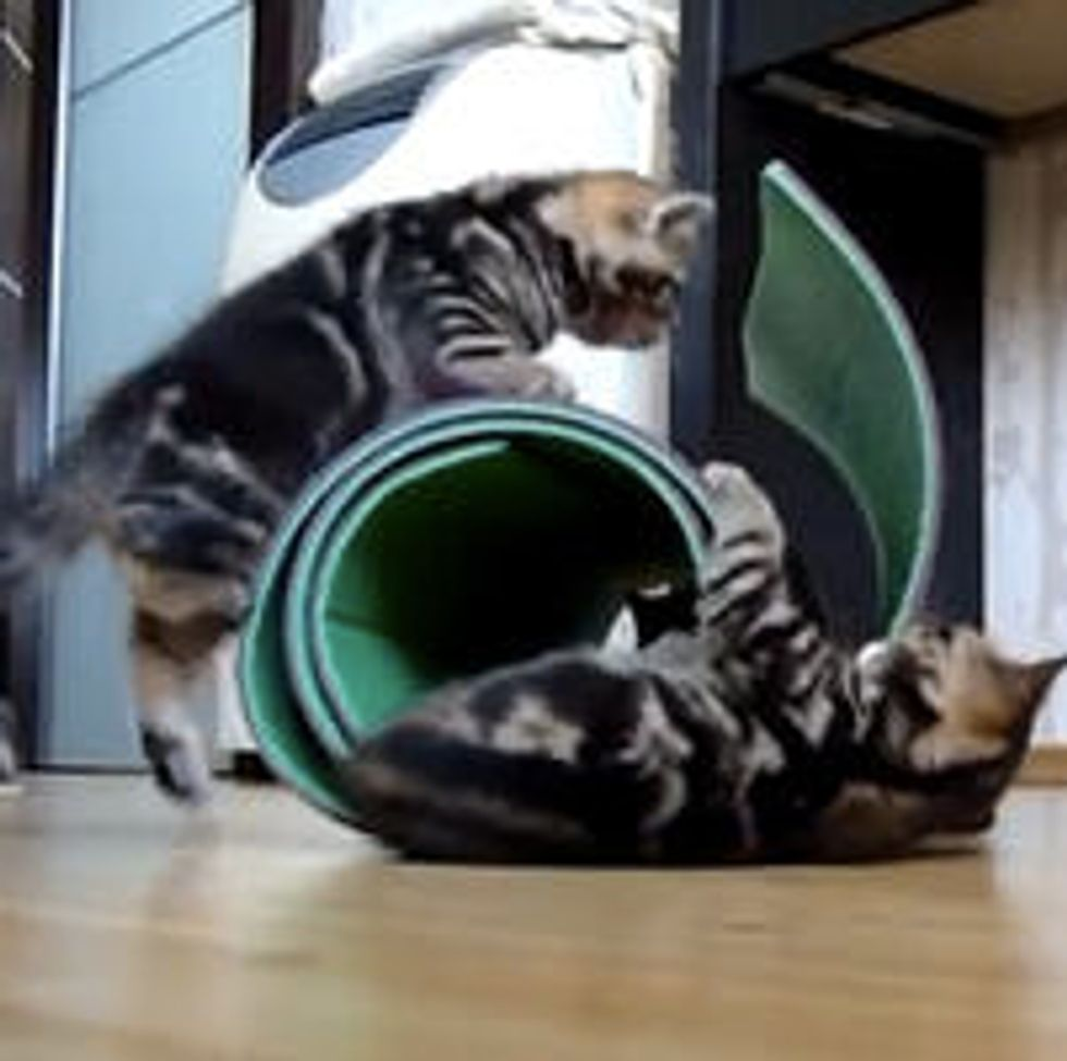 Kittens vs Mat