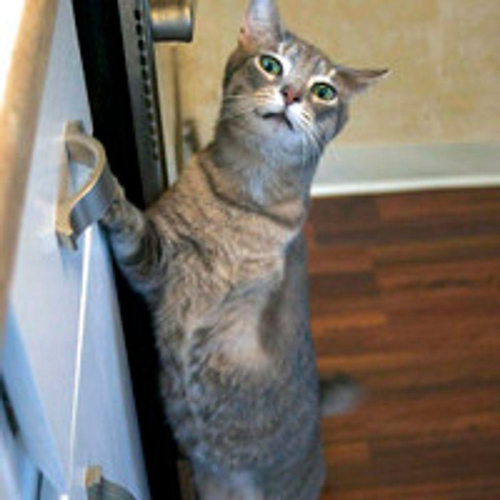 Pythagoras the Tripod Cat