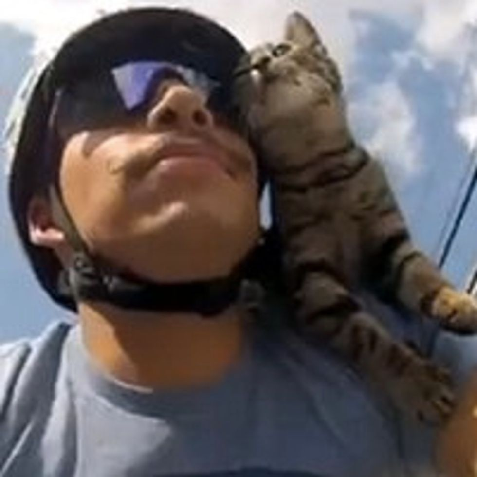 Cat Rides on Bicycle with His Dad