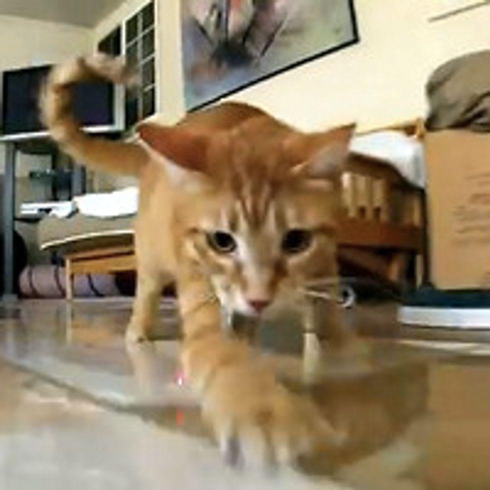 Ginger Cats vs. Laser