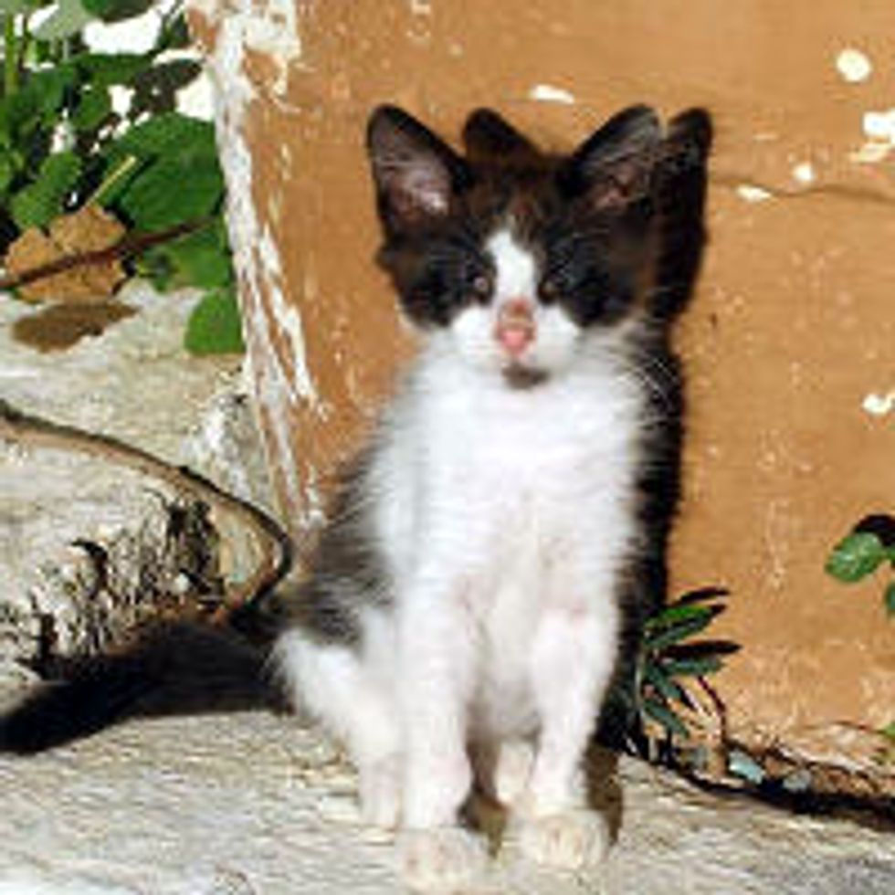 Cat with No Eyes, Journey from Greece to America