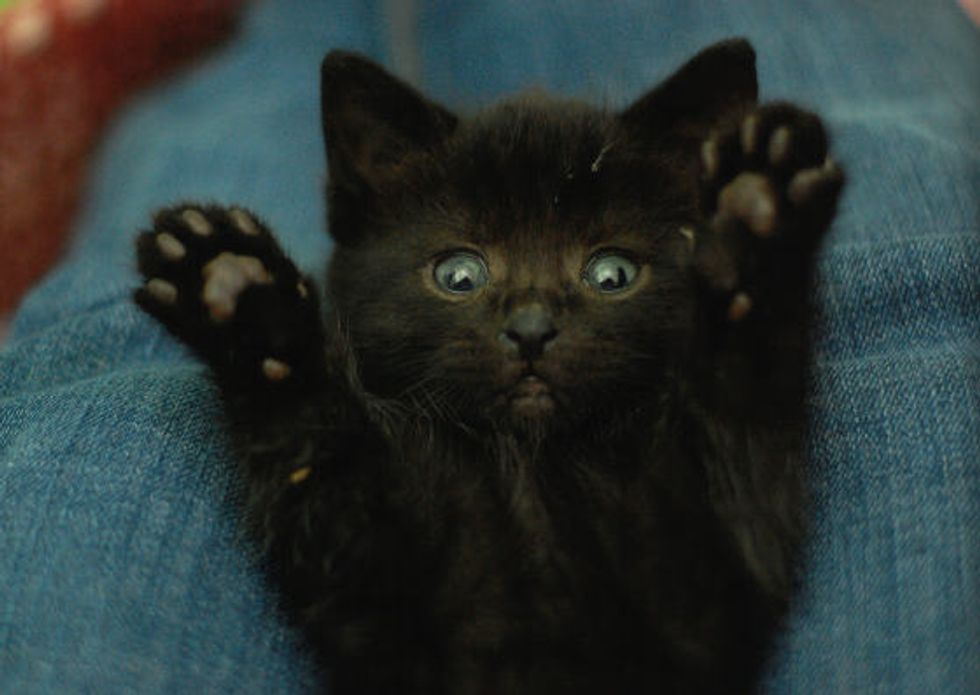 Story of Norma the Black Kitty