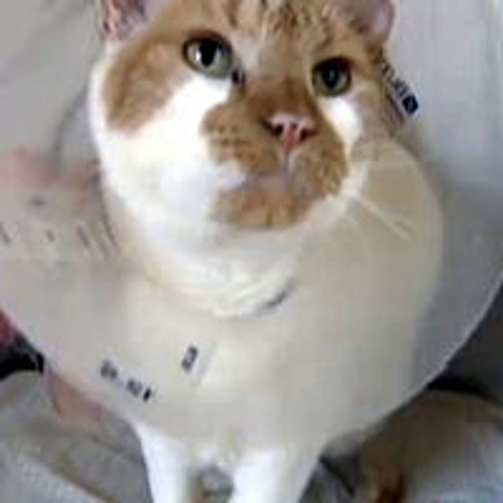 Gumbo the Cat Rescued by Pig After House Fire