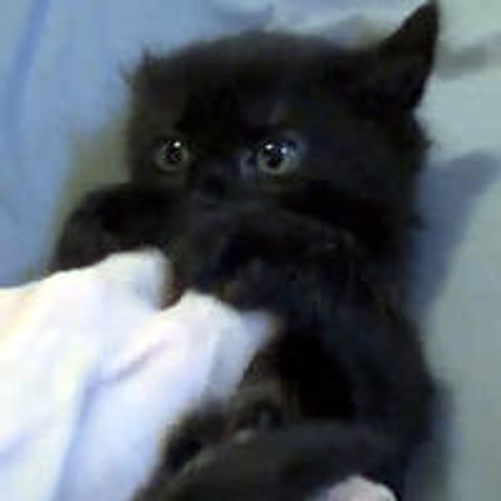 Ticklish Black Kitty: Then and Now