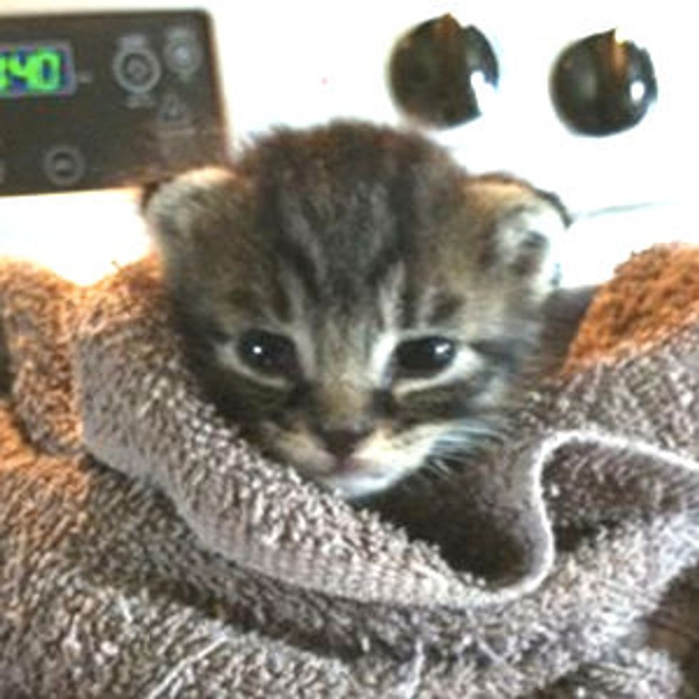 Kitty Rescued from Pound, Growing Up