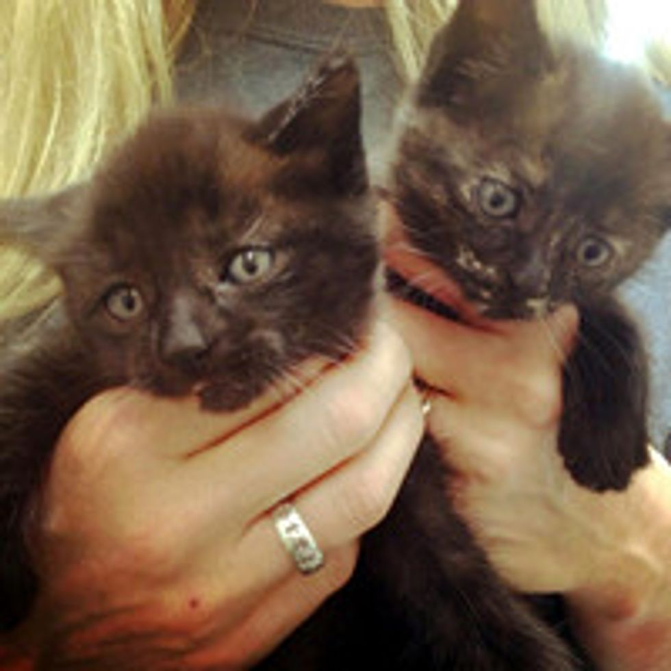 Kittens Rescued from Car Engine; Cat Mama Stood by During Rescue