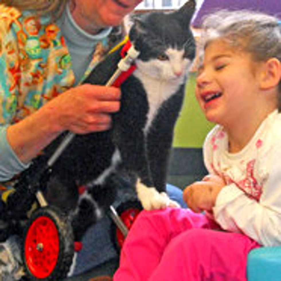 Scooter Special Therapy Cat Becomes ASPCA Cat of the Year