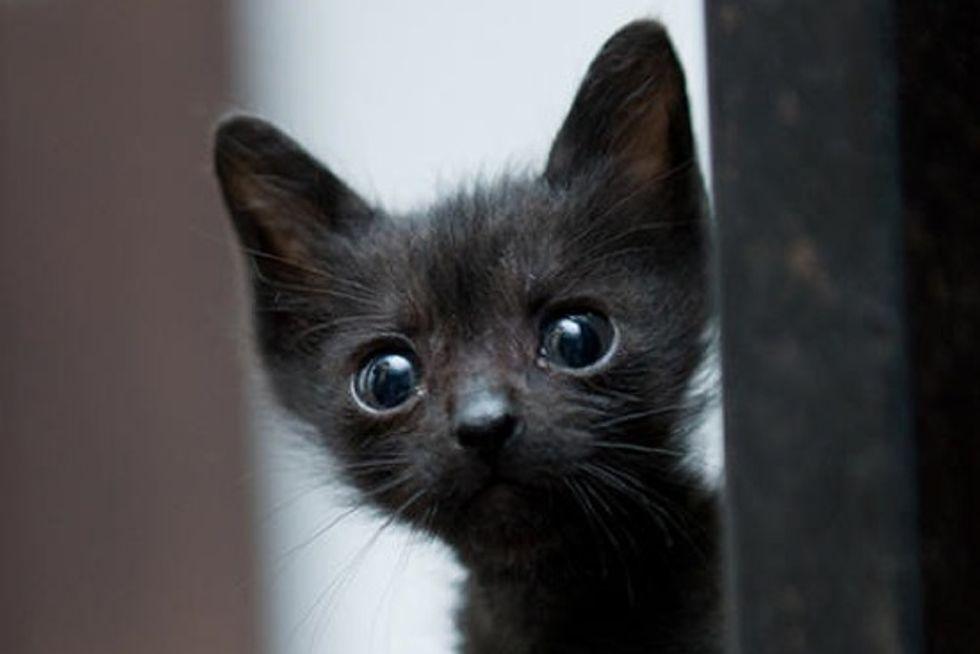 Tiny Rescue Black Kitty: Then & Now