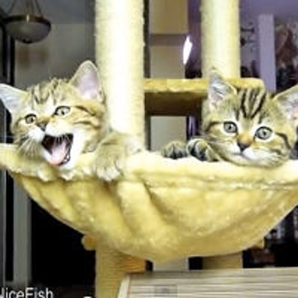Kittens Watching Tennis (Cuteness Alert!)