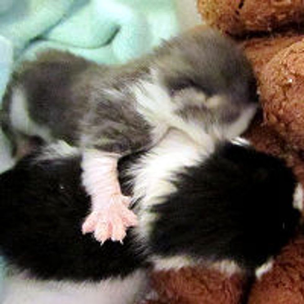 Tiny Sandy Kittens, Now Thriving