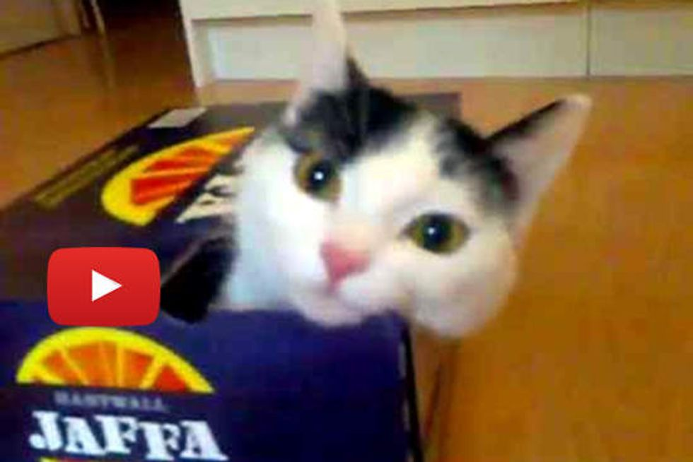 Kitty: Must Get in Box