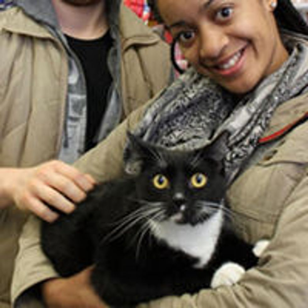 Hurricane Sandy Cat Reunion and Rescue stories
