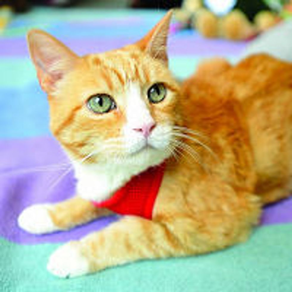 Bogey the Cat with Forgiving Spirit, Turns Past into Helping Children