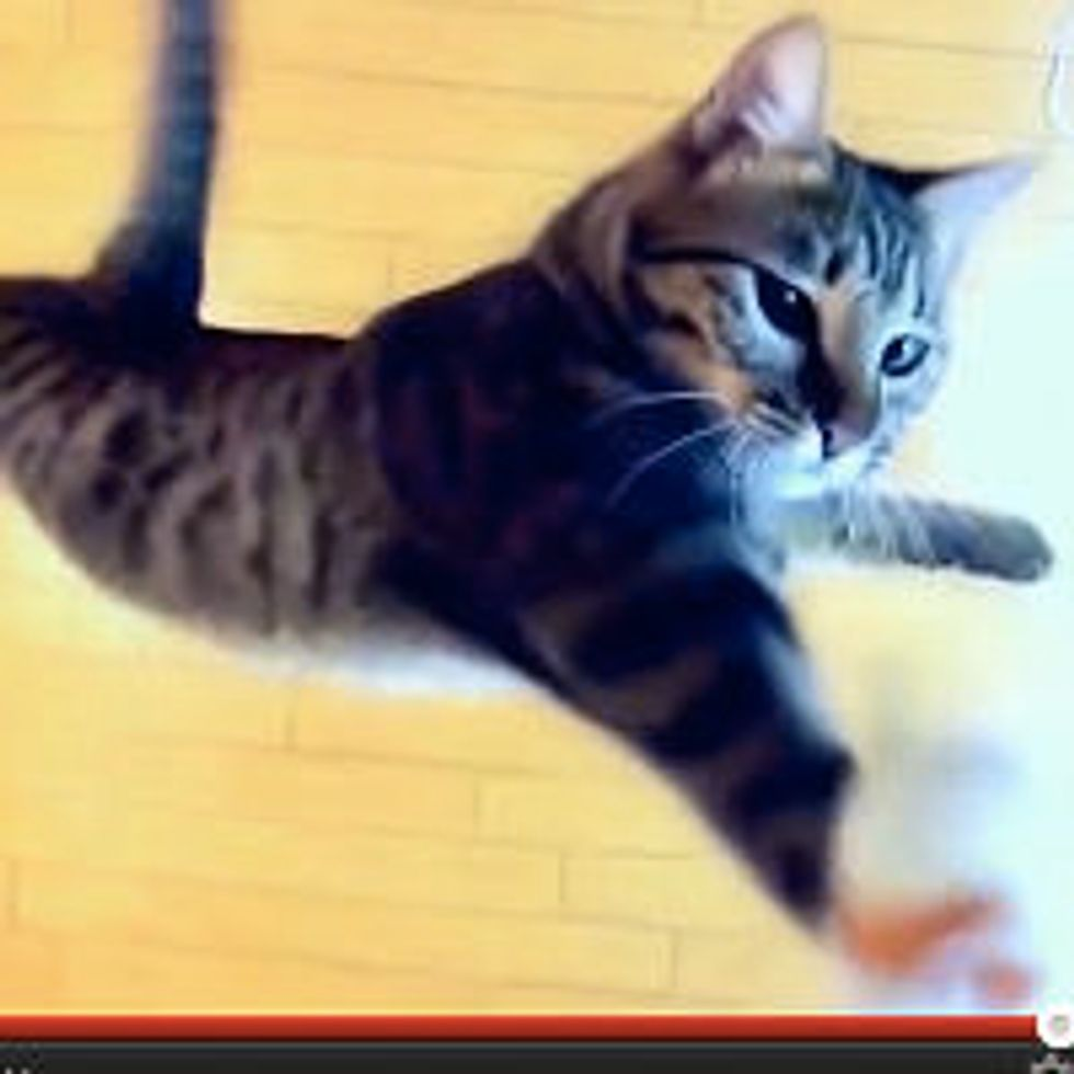 Nothing is Too High for a Jumping Cat
