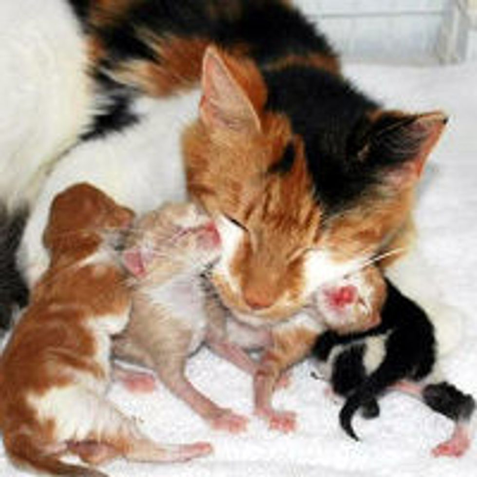 Aww! Kitty Cam Features Stray Cat Mama & Her Babies