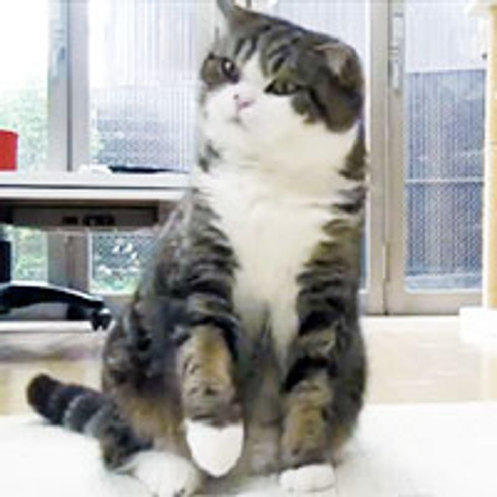 Maru: It's My Toy. Don't Touch!