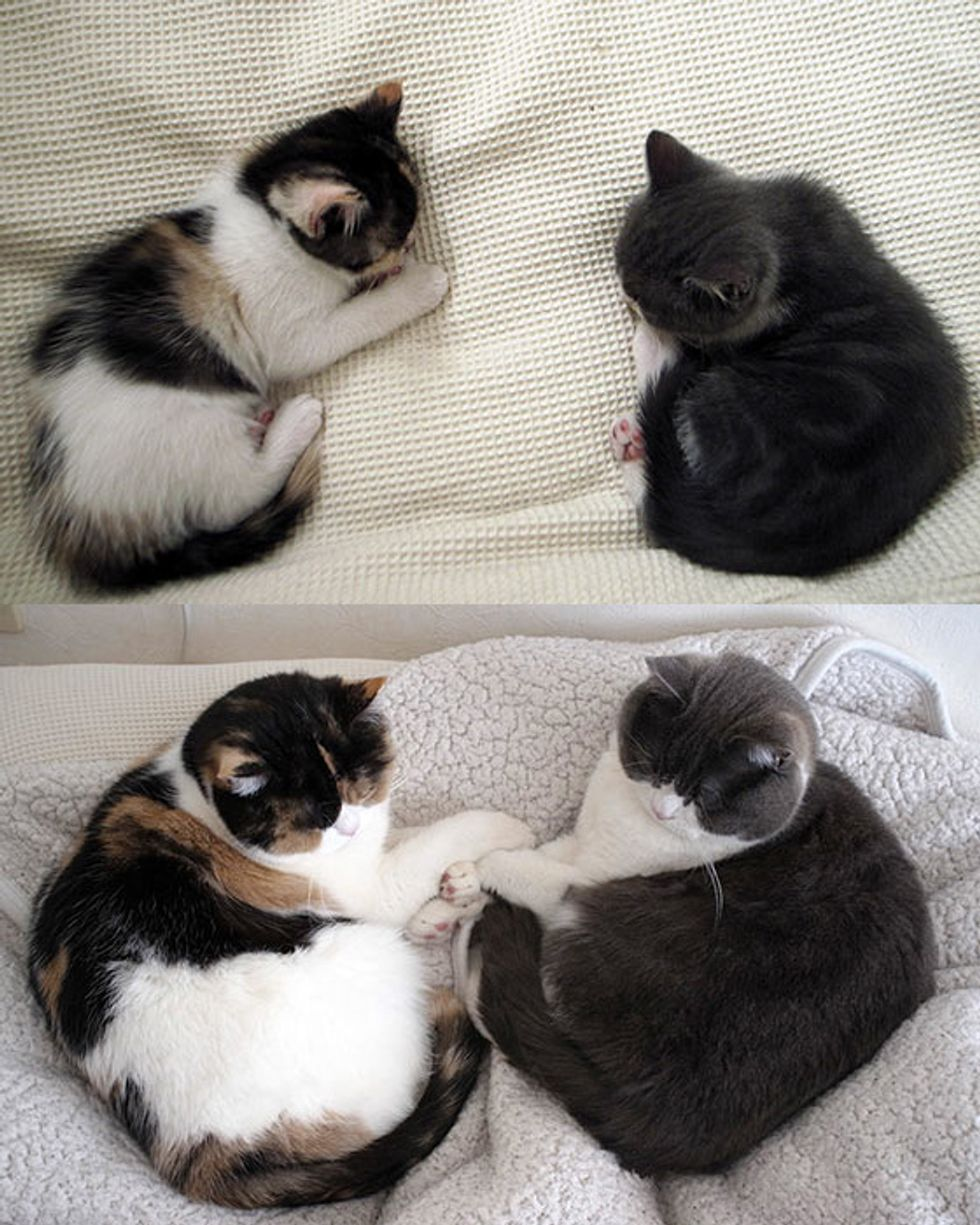 Inseparable Kitty Friends: Then & Now
