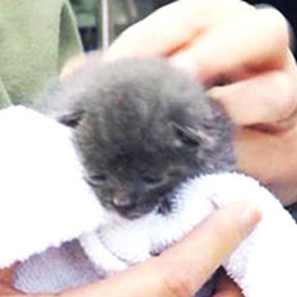 3-Week-Old Kitten Rescued from Abraham Lincoln Statue At President's Hall Of Fame