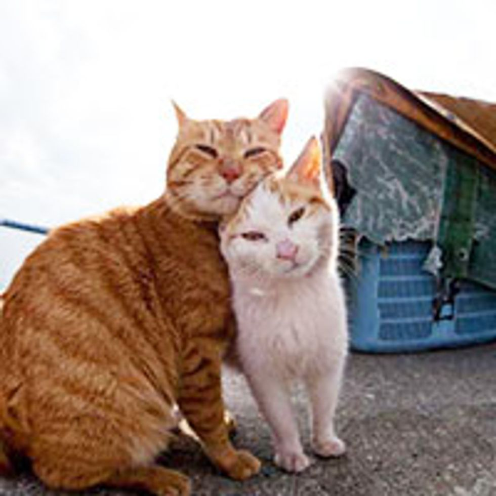 Man Documents Lives of Island Cats