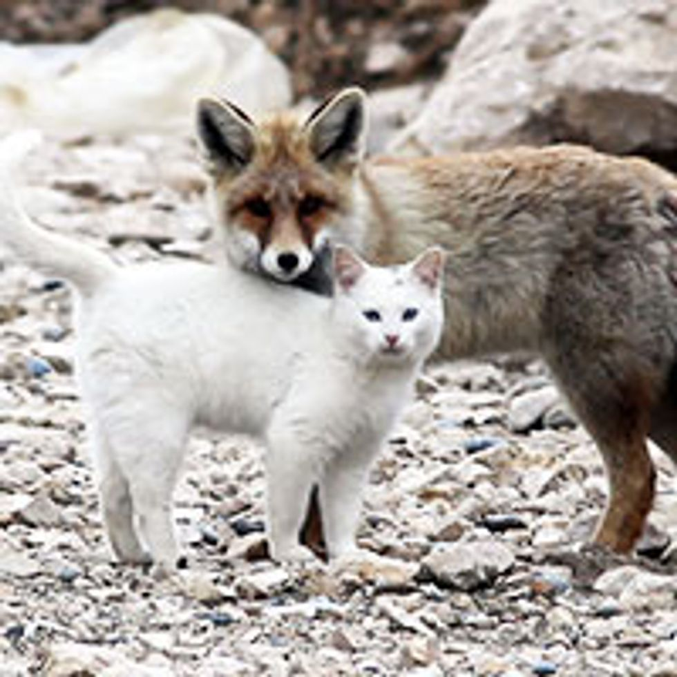 Cat and Fox: Unlikely Friendship